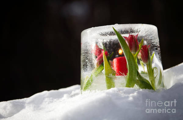 Wall Art - Photograph - Ice Lantern by Kati Finell