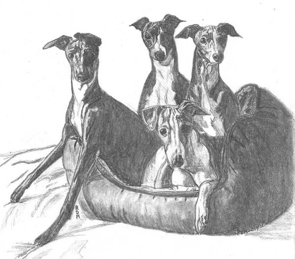 Sight Hound Drawing - 4 Iggies In A Bed by Rahael Maxwell
