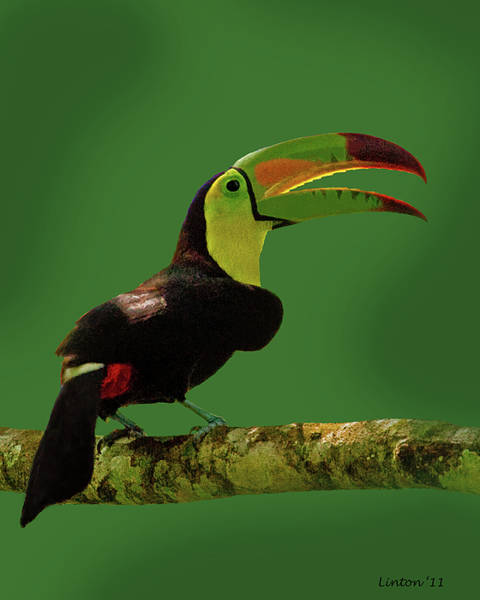 Photograph - Keel-billed Toucan by Larry Linton