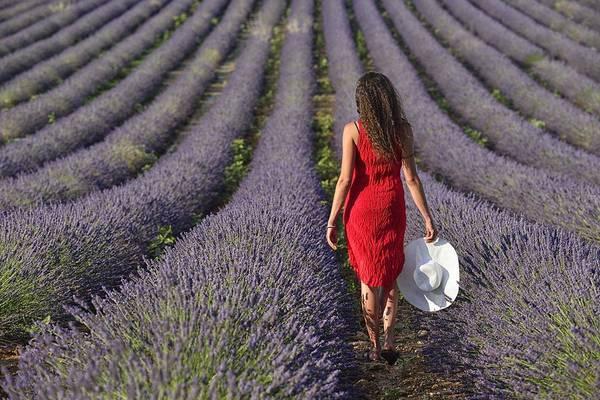 Wall Art - Photograph - Lavender Field by Christian Heeb