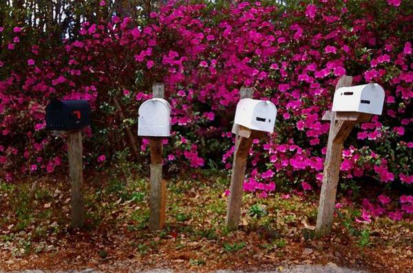 Alabama Painting - 4 Mailboxes by Michael Thomas