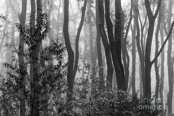 Photograph - Misty Forest by Odon Czintos