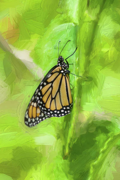 Photograph - Monarch Butterflies by Rich Franco