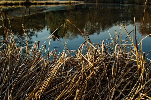 Photograph - Morning Frost by Miguel Winterpacht