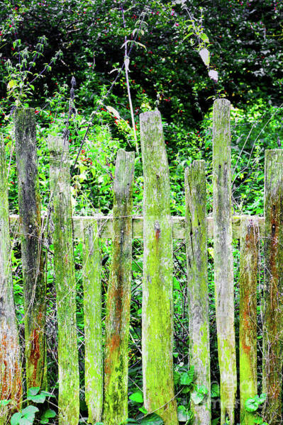 Wall Art - Photograph - Old Fence by Tom Gowanlock
