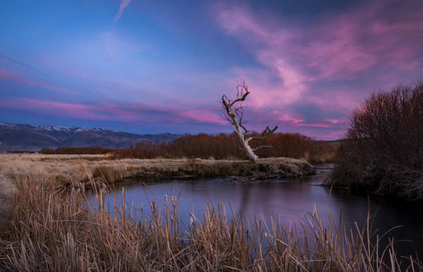 Wall Art - Photograph - Owens River Sunset by Cat Connor