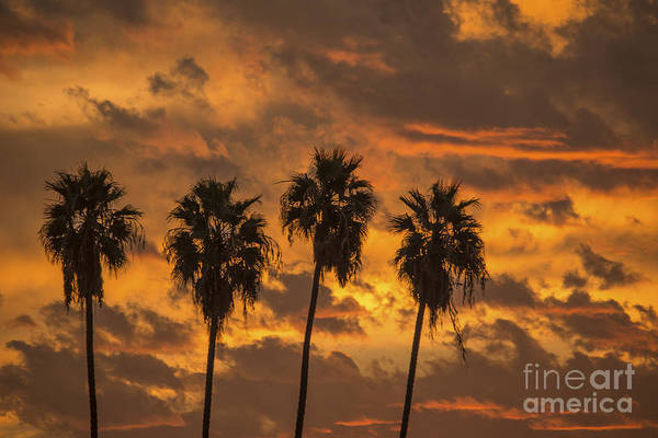 Los Angeles Skyline Photograph - 4 Palm Trees And Sunrise by Art K