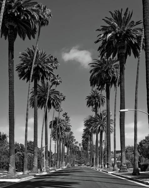 Wall Art - Photograph - Palms Of Beverly Hills by Mountain Dreams