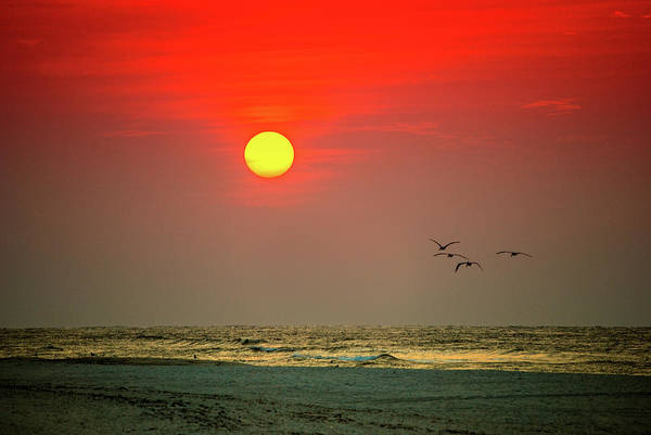 Photograph - 4 Pelican Red Sunrise by Michael Thomas