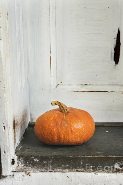 Wall Art - Photograph - Pumpkin by Jelena Jovanovic