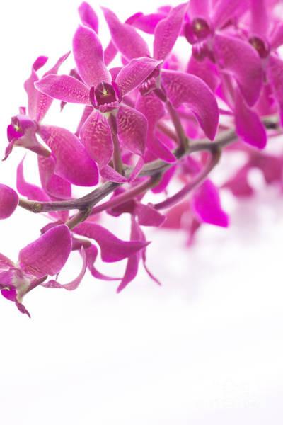 Spa Photograph - Purple Orchid Bunch by Atiketta Sangasaeng