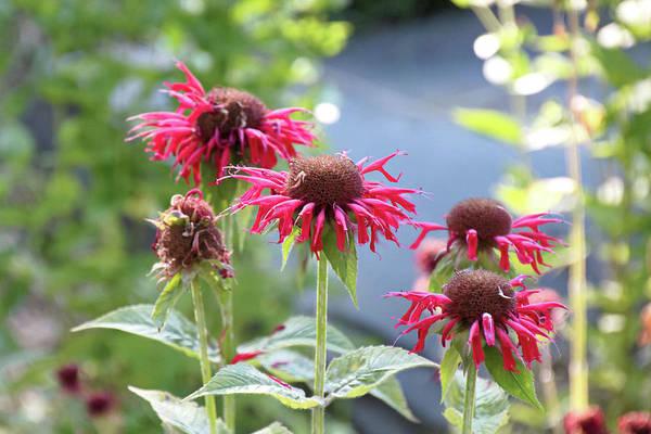 Photograph - Red Flower by Susan Jensen