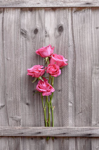 Wall Art - Photograph - Roses by Svetlana Sewell