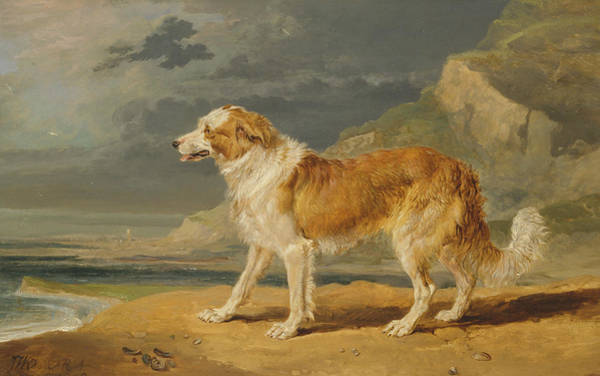 Ward Painting - Rough-coated Collie by James Ward