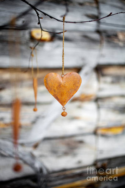 Wall Art - Photograph - Rustic Hearts by Kati Finell