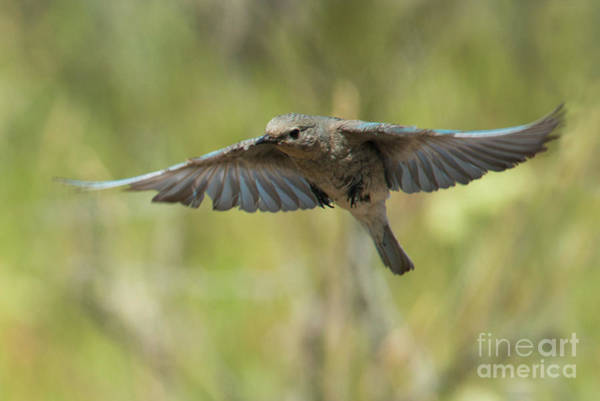 Hover Photograph - Spread Your Wings by Mike Dawson