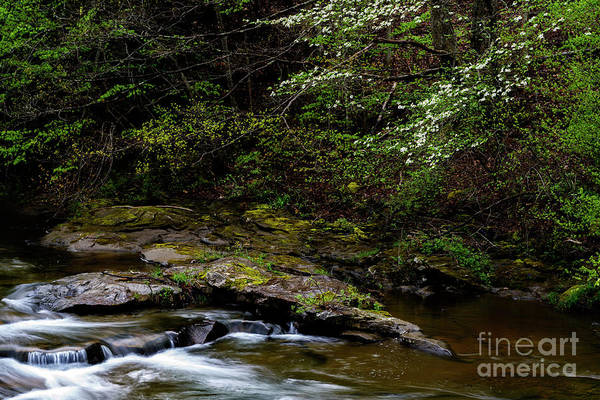 Photograph - Spring Along Birch River by Thomas R Fletcher