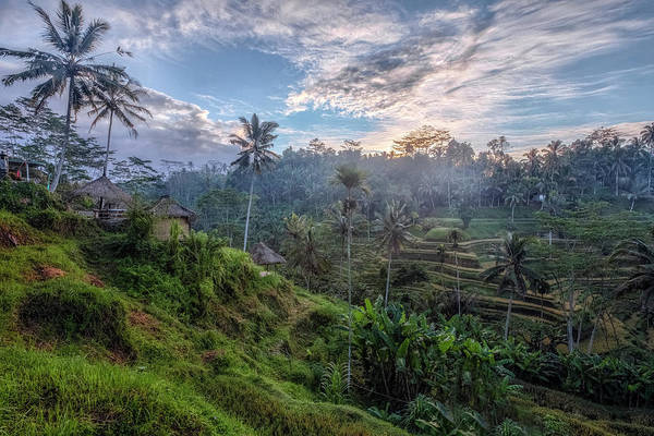 Rice Photograph - Tegalalang - Bali by Joana Kruse