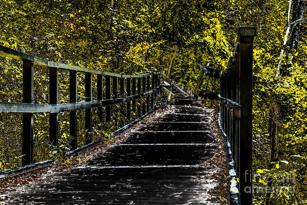 Photograph - The Path by William Norton
