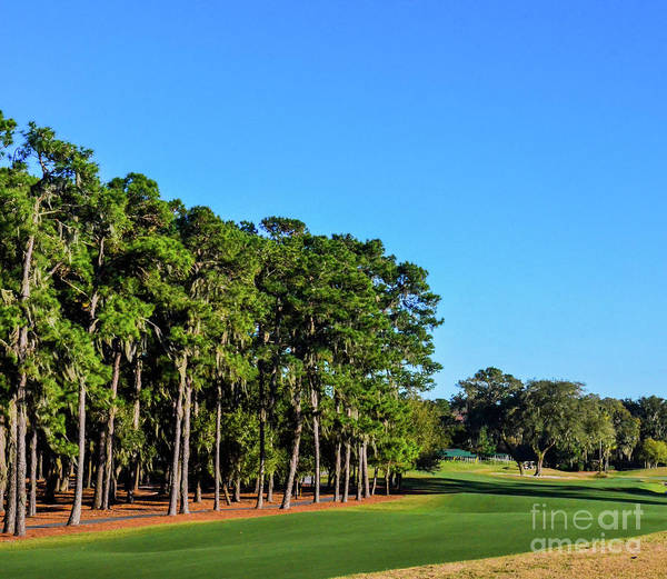 Photograph - Tpc Sawgrass by Randy J Heath