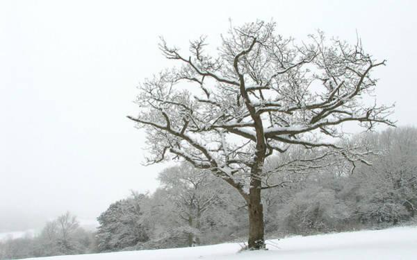 Landscape Digital Art - Tree by Maye Loeser