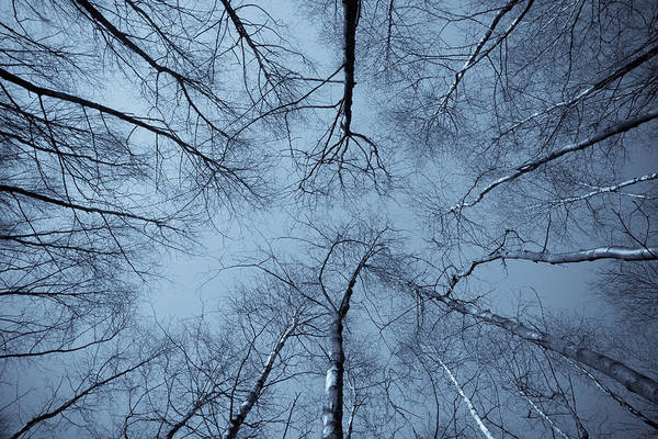 Epping Wall Art - Photograph - Trees In Epping Forest by David Pyatt