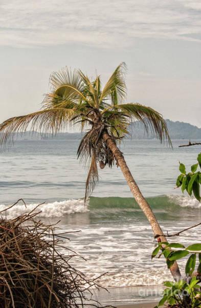 Cahuita Photograph - Tropical Beach by Patricia Hofmeester