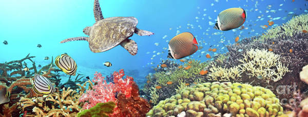 Caribbean Wall Art - Photograph - Underwater Panorama by MotHaiBaPhoto Prints