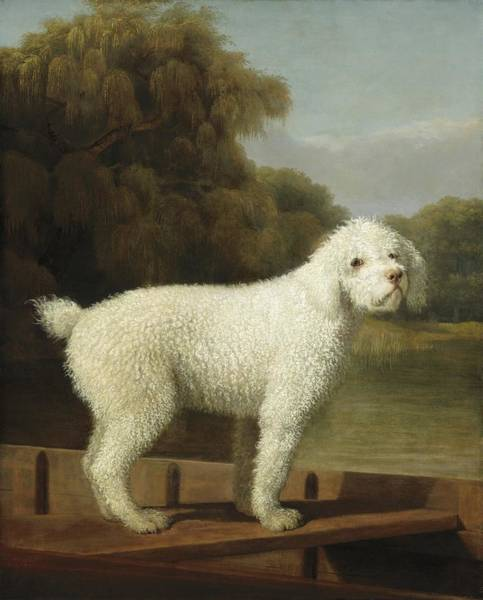 Assistance Painting - White Poodle In A Punt by George Stubbs