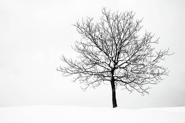 Jance Photograph - Winter by Ian Middleton
