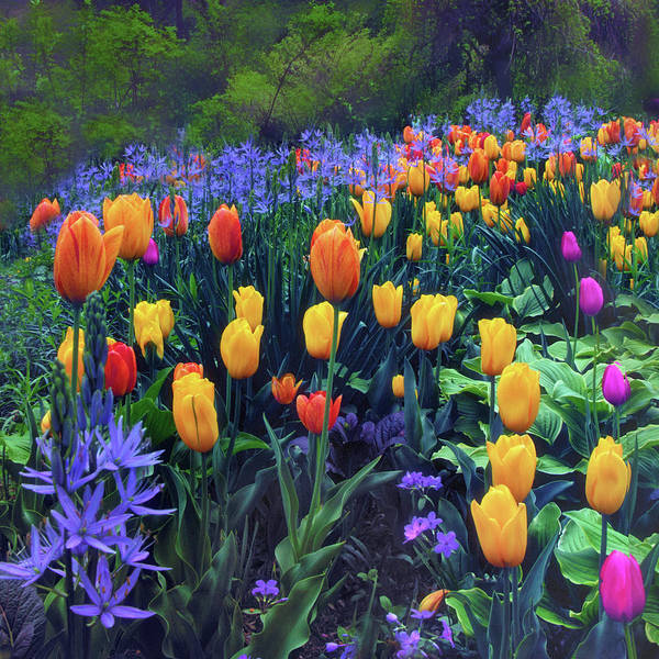 Wall Art - Photograph - Procession Of Tulips by Jessica Jenney