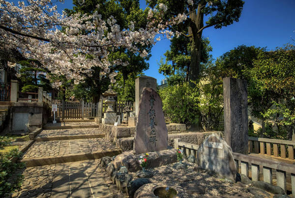 Photograph - 47 Samurai And Cherry Blossoms by Ross Henton