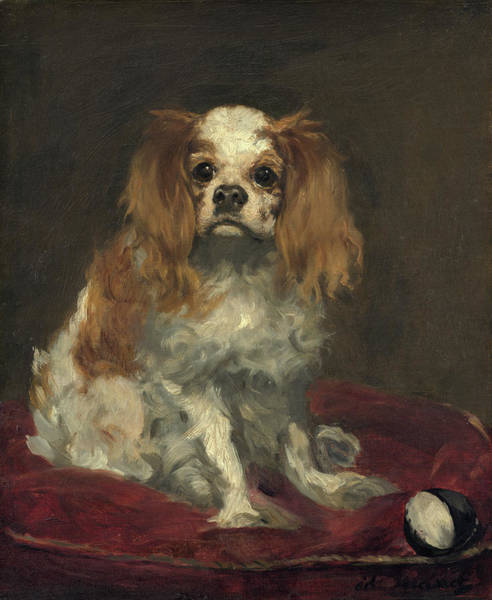 Painting - A King Charles Spaniel by Edouard Manet
