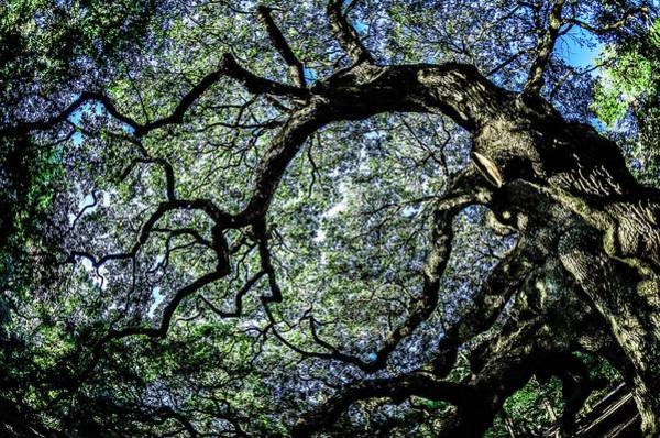 Photograph - Angel Oak Tree On John's Island South Carolina by Alex Grichenko