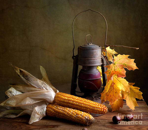 Corn Photograph - Autumn by Nailia Schwarz