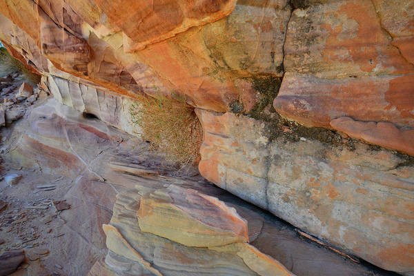 Photograph - Bands Of Color In Valley Of Fire by Ray Mathis