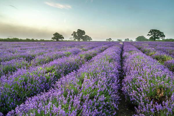 Wall Art - Photograph - Beautiful Dramatic Misty Sunrise Landscape Over Lavender Field I by Matthew Gibson
