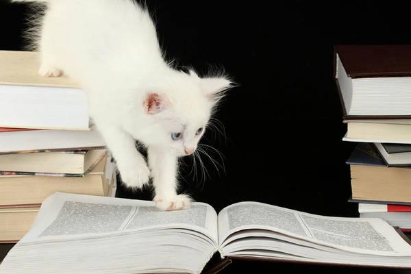 Animal Digital Art - Cat by Maye Loeser