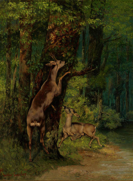 Wall Art - Painting - Deer In The Forest by Gustave Courbet
