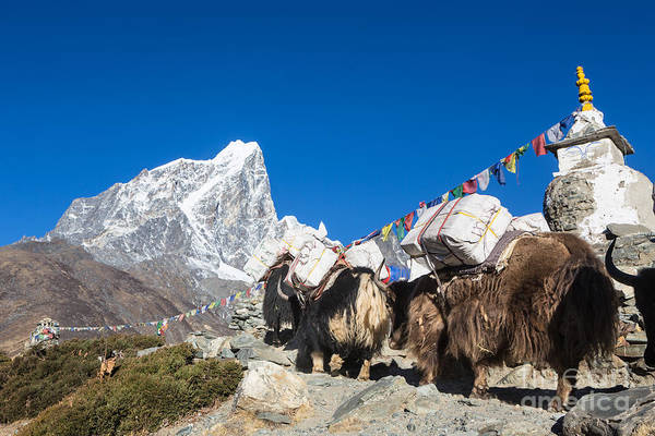 Photograph - Dingboche Stupa In Nepal by Didier Marti