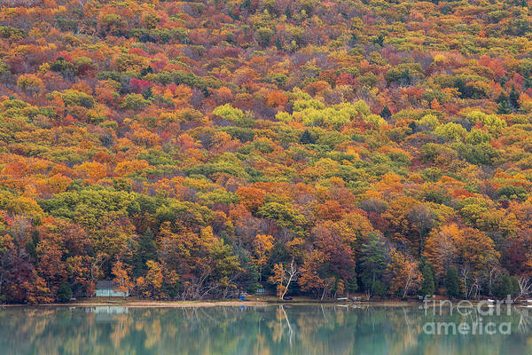 Arbor Photograph - Fall Trees Over Glen Lake by Twenty Two North Photography