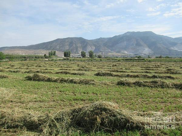 Photograph - Field Near Padul by Chani Demuijlder