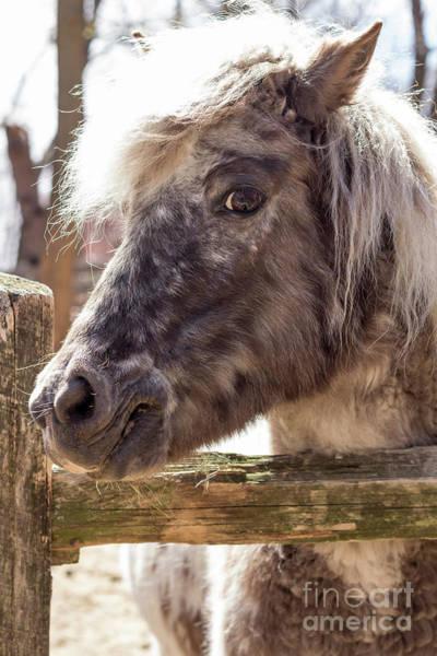 Eriskay Wall Art - Photograph - Grey Pony by Ezume Images