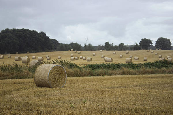 Wall Art - Photograph - Hay Bales by Martin Newman