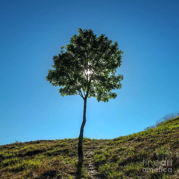 Wall Art - Photograph - Isolated Tree by Bernard Jaubert