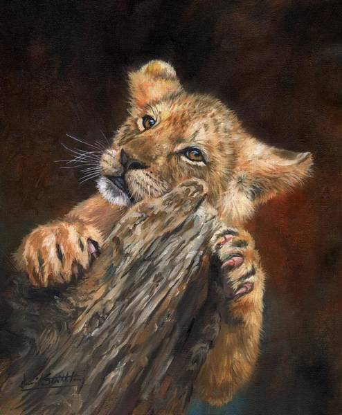 Baby Lions Wall Art - Painting - Lion Cub by David Stribbling