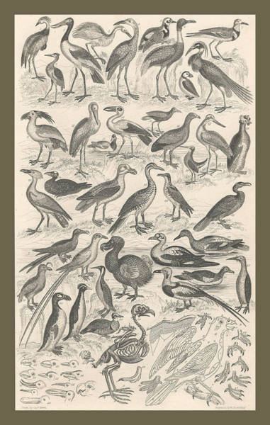 Wall Art - Painting - Ornithology by Dreyer Wildlife Print Collections