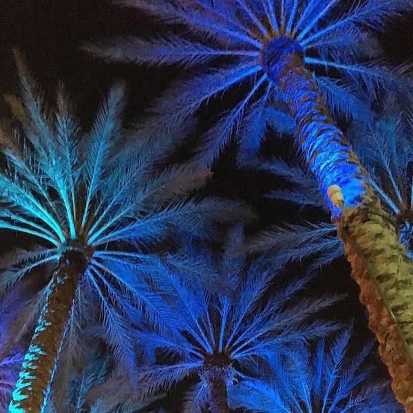 Photograph - Palm Trees On My Mind by Stephanie Agliano