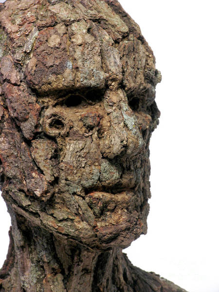Male Mixed Media - Revered A Natural Portrait Bust Sculpture By Adam Long by Adam Long