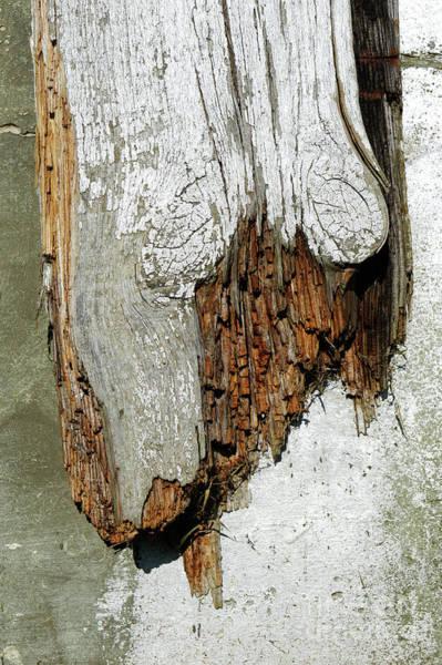 Wall Art - Photograph - Rotting Wood by Tom Gowanlock